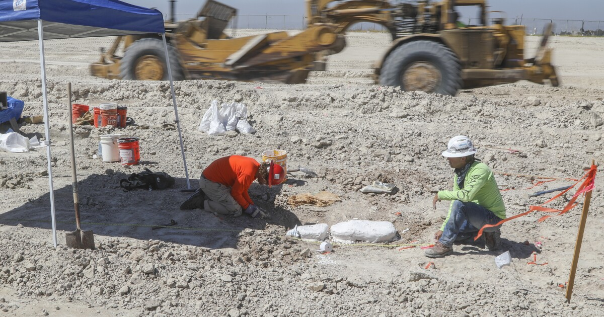 Freeway project unearths a time when camels roamed San Diego