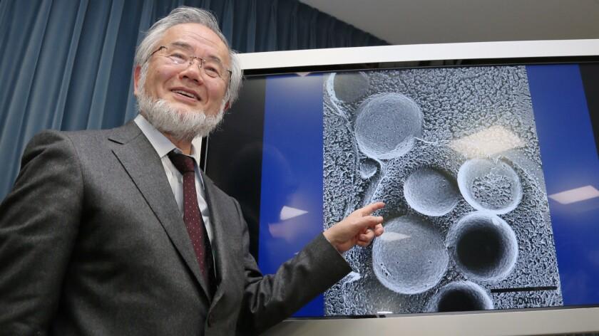 Japanese scientist Yoshinori Ohsumi