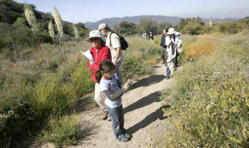 Amateur photographers take photos of native plants in Deukmejian Wilderness Park.
