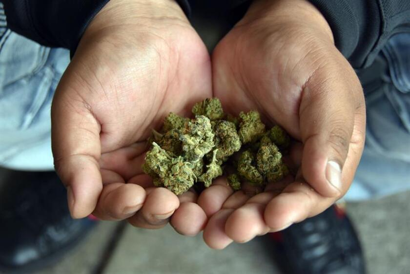 La Policía canadiense detuvo hoy a un individuo acusado de conducir bajo la influencia de la marihuana y otras drogas, y de causar un accidente en el norte de Toronto, tres días después de la legalización del cannabis en el país. EFE/ARCHIVO