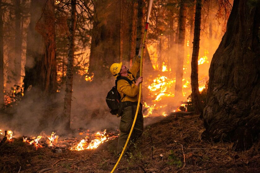 A firefighter uses a hose among trees, smoke and brush on fire