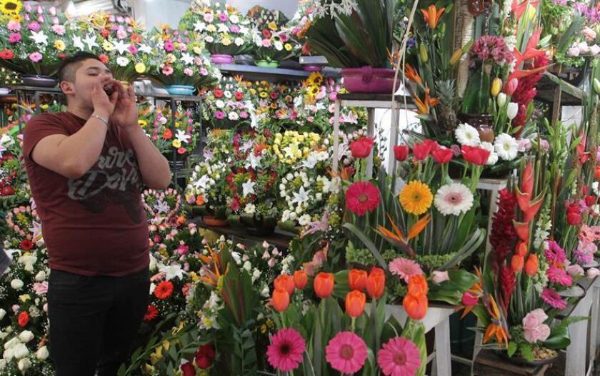 En el día de San Valentín, las flores viajan de una punta a otra de las ciudades hasta llegar a las manos de los seres queridos. Sin embargo, esta tradición ignora algunas especies silvestres mexicanas bellas e importantes que no gozan de tanto protagonismo. EFE