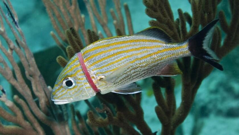Imágenes de impacto: Animales marinos con estómagos llenos de basura