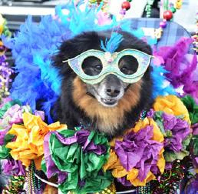 A past Doggie Gras participant