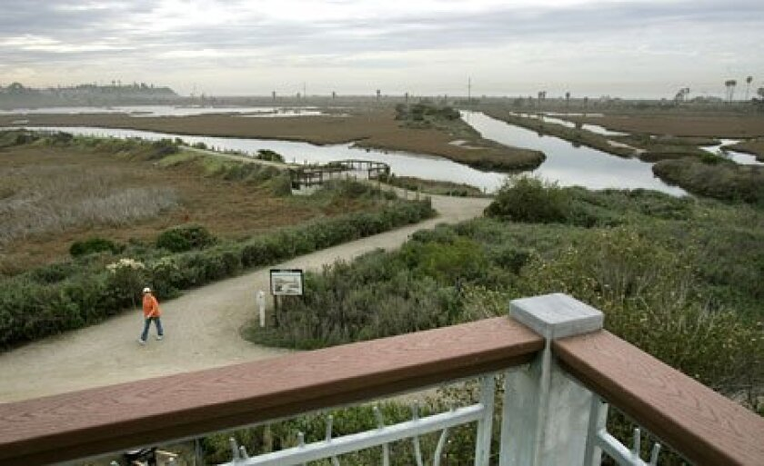 Visitors standing on the upper-floor balcony of the new San Elijo Nature Center will take in this view, which showcases miles of salt marsh beds blooming with pickleweed and cord grass divided by channels and mud flats. (Charlie Neuman / Union-Tribune)