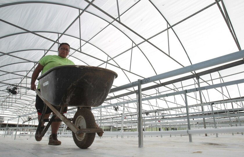Staff member Alejandra Olmos helps clean up Tuesday in the expanded space at Solutions Farms.