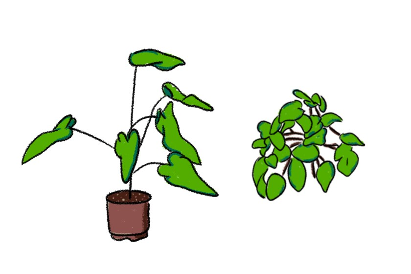 Mark Redito's favorite plants are philodendrons and pothos.