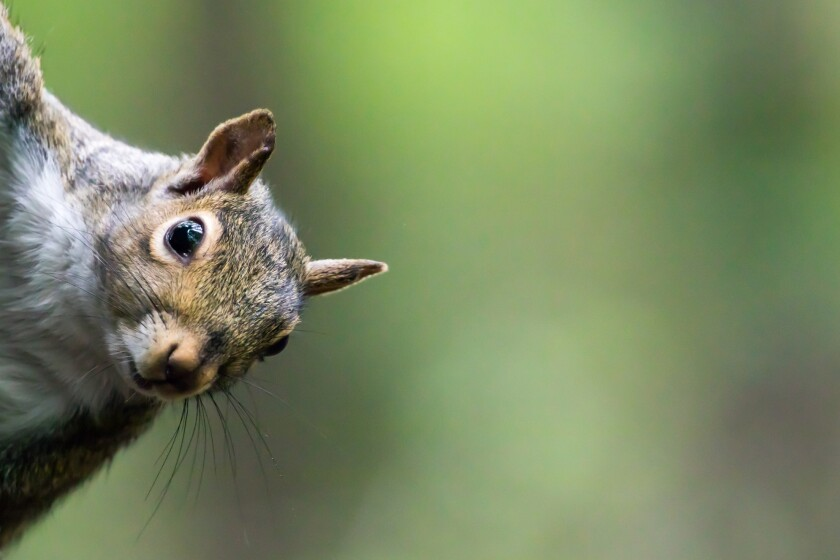 """A Frontier Airlines flight boarding in Orlando was delayed for two hours after a women who brought an """"emotional support squirrel"""" onboard refused to exit the plane."""