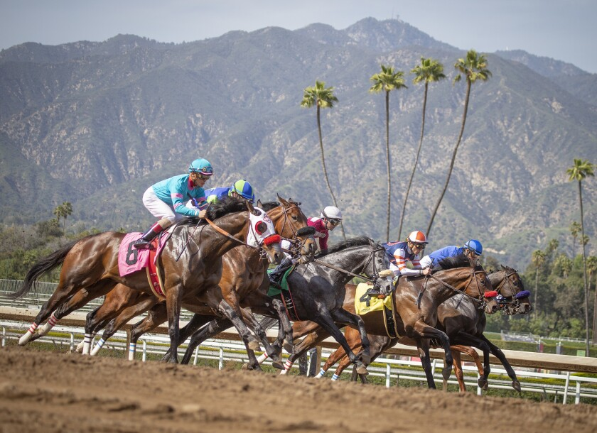 Horses break from the gate during a race at Santa Anita Park.