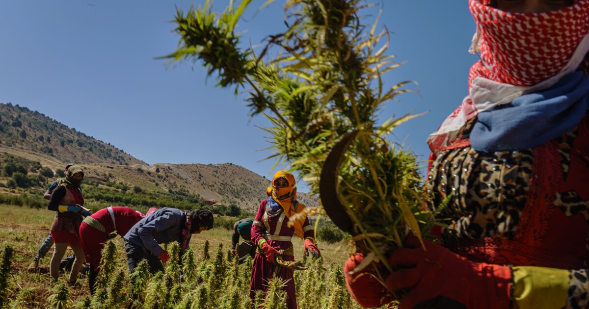 Lebanon's economy is going to pot — in a good way, it hopes