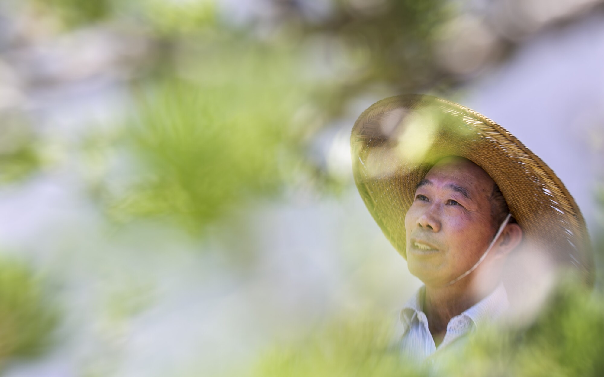 The Huntington's resident penjing artist, Che Zhao Sheng.