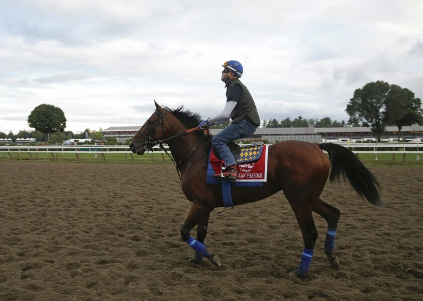 Triple Crown winner American Pharoah, with exercise rider George Alvarez up, works out at Saratoga Race Course on Thursday, Aug. 27, 2015, in Saratoga Springs, N.Y. American Pharoah is the overwhelming 1-5 favorite in a 10-horse field for Saturday's Travers Stakes horse race at Saratoga. (AP Photo/Mike Groll)