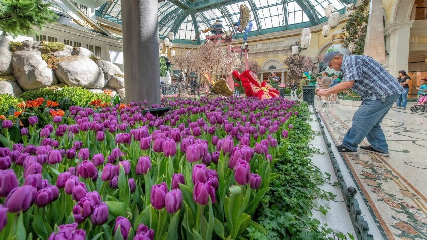 Bellagio Spring Display