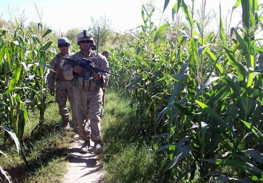 Sgt. Jacob Tambunga and other Marines walk through a corn field during patrol last year in the Nawa district of Helmand province, Afghanistan.
