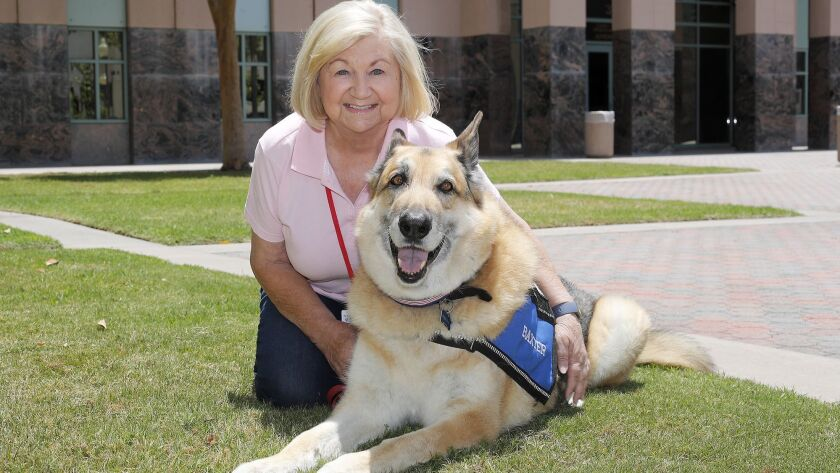 Certified therapy dog Baxter, a 10-year-old German Shepard rescue, with owner and handler Cheryl Tim