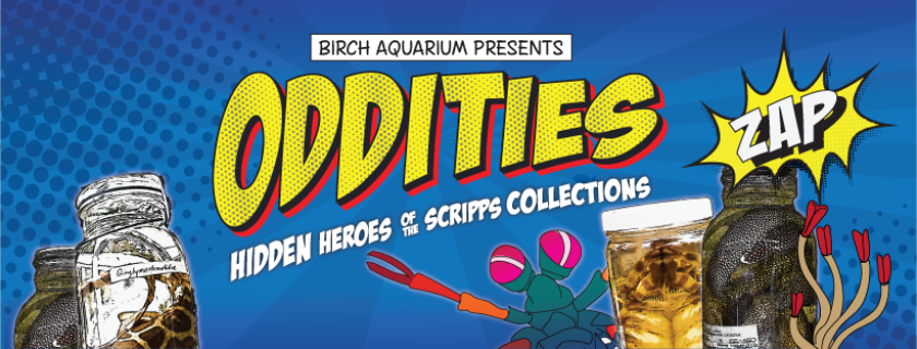 The 'Oddities' exhibit at Birch Aquarium in La Jolla opens with a 21-and-older event, Sunset and Superheroes, 5:30 p.m. Friday, June 29. There will be live music, comic-themed activities and one hero of a sunset. Tickets: $23 and $26.