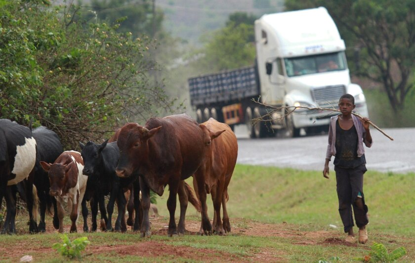 FILE - In this file photo taken Saturday, Nov. 2, 2013 a boy herds cattle on the main road to Zimbabwe in the border town of Manica, Mozambique. Renamo attacks on transport routes and other infrastructure in Central Mozambique has hurt tourism and other economic activity at a time when Mozambique i