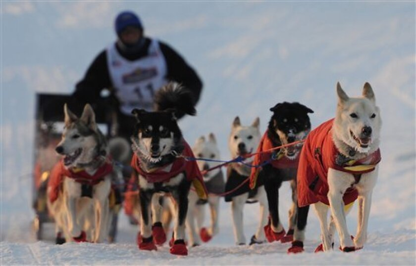 Paul Gebhardt drives his dog team up the sea wall in Nome during the finish of the Iditarod Trail Sled Dog Race on Wednesday, March 13, 2013. Mitch Seavey and 10 dogs crossed the Nome finish line to cheering crowds to win Alaska's grueling test of endurance. For reaching Nome first, Seavey wins $50,400 and a 2013 pickup truck. The rest of the $600,000 purse will be split among the next 29 mushers to cross the finish line under the famed burled arch on Front Street, a block from the sea. (AP Ph