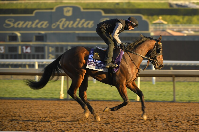 Four Wheel Drive, entered in the Juvenile Turf Sprint horse race, works out on the track at Santa Anita Park on Thursday