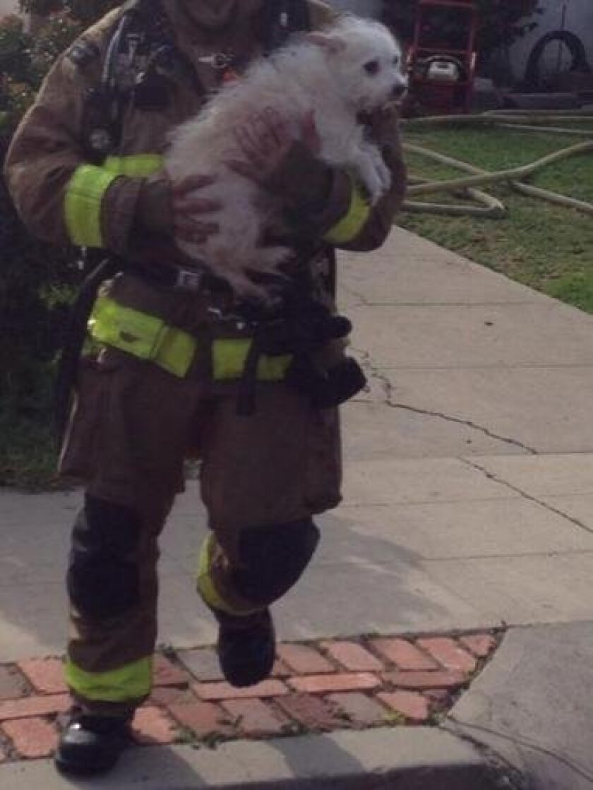 A San Diego firefighter carries one of the two dogs saved from a Point Loma house fire.