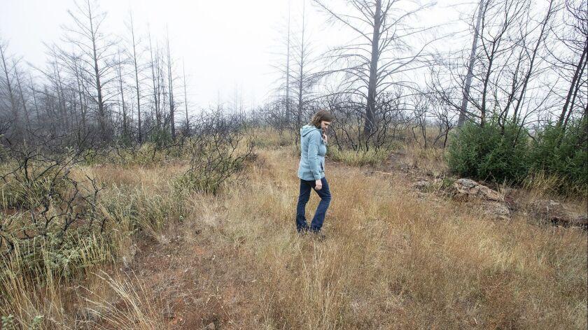 Pepperwood Preserve ecologist Michelle Halbur walks through regrowth and grasses in the Santa Rosa preserve.