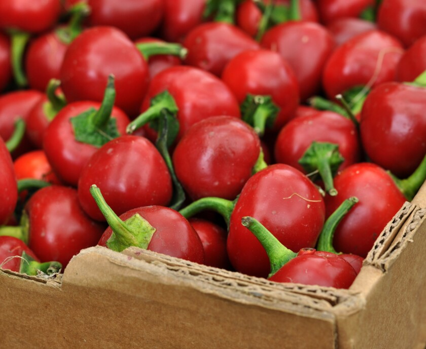 Cherry Bomb peppers from Underwood Family Farms
