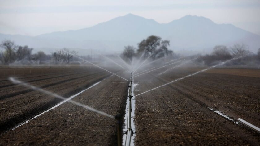 Sprinklers irrigate a farm field in the Sacramento-San Joaquin Delta.