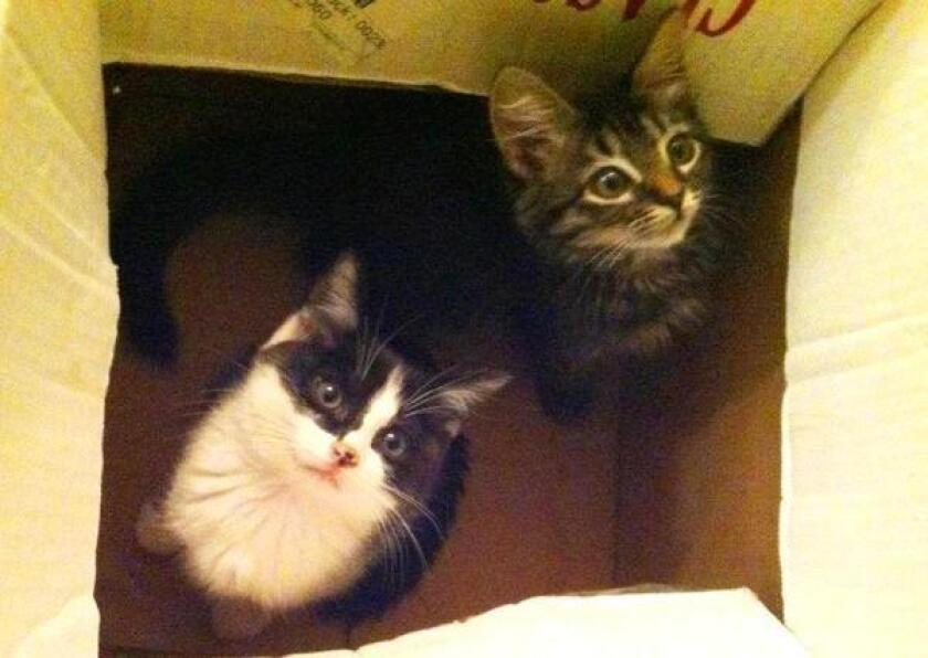 Kittens: productivity boosters?