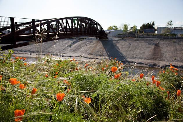 This photo caption has been corrected. California poppies next to a pedestrian bridge west of Overland Avenue in Culver City. For the record, 11 a.m. April 19: A previous caption for this photo incorrectly identified the scene as being in Playa del Rey.
