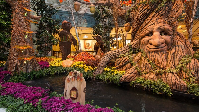 A 28-foot-tall animated tree that talks to guests is one of the centerpieces of the fall display gracing the conservatory and gardens at Bellagio. There's no admission charge.