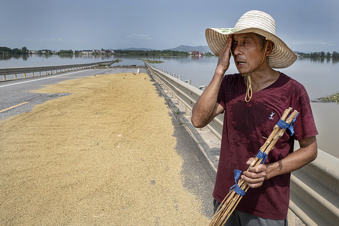 Sheng, a local farmer, lays out rice seeds to dry on a flooded road, surrounded by his flooded farms.