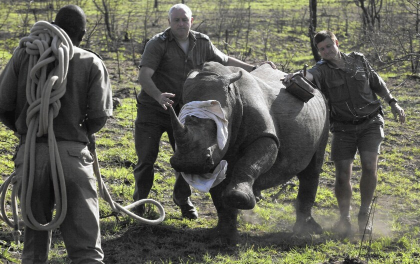 South Africa lifts rhino trade moratorium