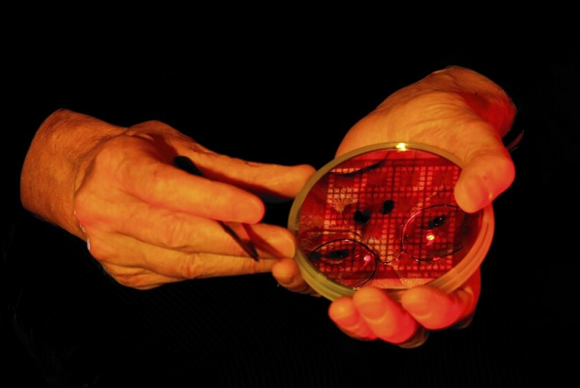 Dr. Jim Gimzewski's face is reflected in petri dish