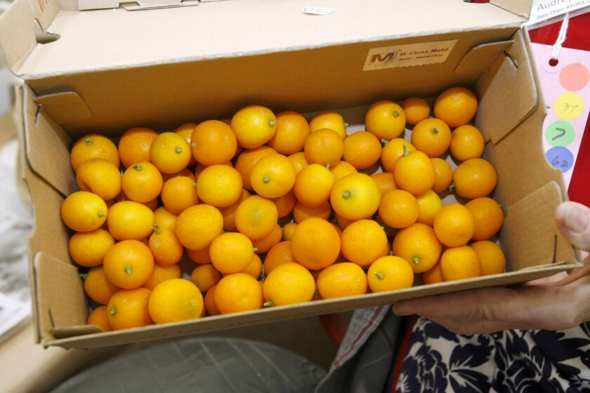 The Burbank Tournament of Roses Assn. received generous donations of kumquats to decorate their float, after their vendor told them they had run out of the small citrus fruits.