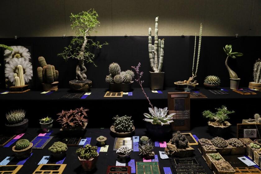 Inter-city Cactus & Succulent Show & Sale