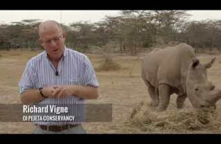 Northern white rhinos on the brink of extinction