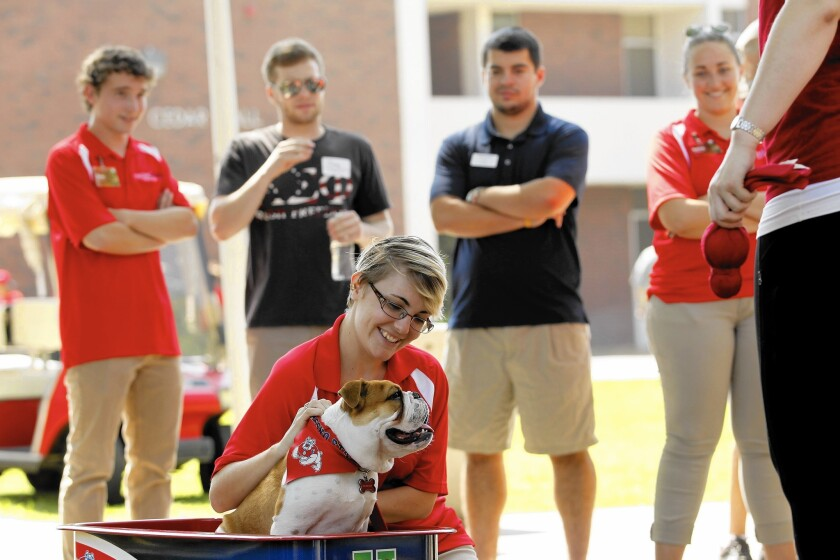 Victor E. Bulldog III is greeted by students on dorm move-in day at Fresno State University.Victor assumed the role of campus mascot after the death of Victor E. Bulldog II.