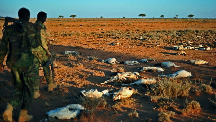 Dead goats are seen in December near Dhahar in northeastern Somalia. The country's food shortage is likely to get worse as a result of the U.S. travel ban's limitation on international aid agencies.