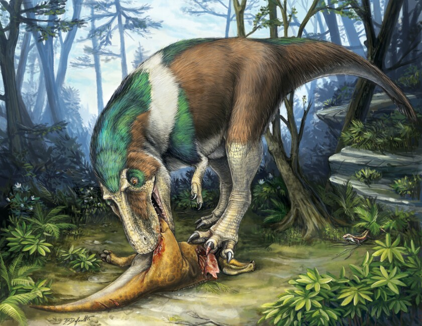 Meat-eating theropods like this Gorgosaurus -- and the famous Tyrannosaurus rex -- had serrated teeth that allowed them to tear the flesh of their prey, scientists said Tuesday.