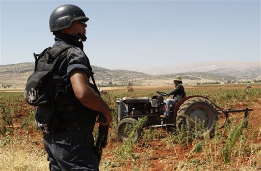 In this photo taken Thursday, Aug. 20, 2009, a Lebanese policeman stands guard as a tractor destroys cannabis plants in the town of Bouday near the northeastern Bekaa Valley region of Baalbek, Lebanon. Hundreds of policemen supported by Lebanese soldiers began a major campaign to destroy about 15,0