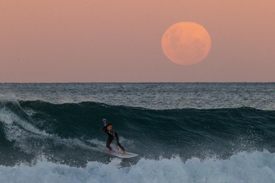 Un surfista cavalca un'onda mentre una super luna insanguinata sorge a Manly Beach
