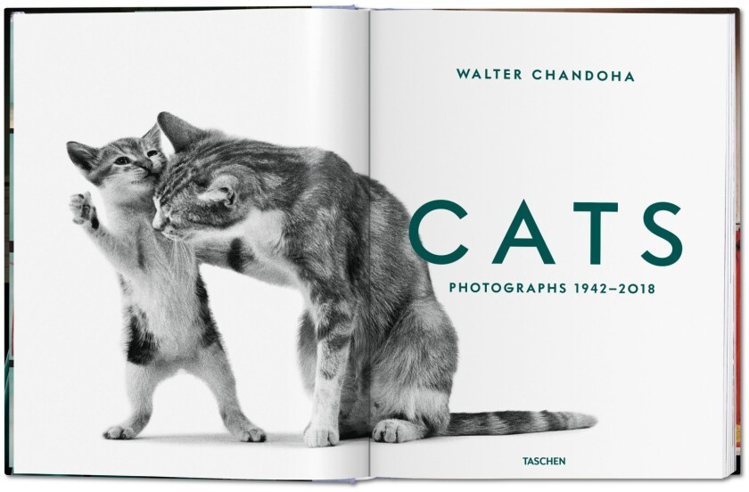 Cats book