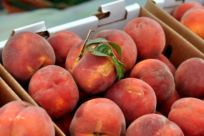 Judy Flame peaches