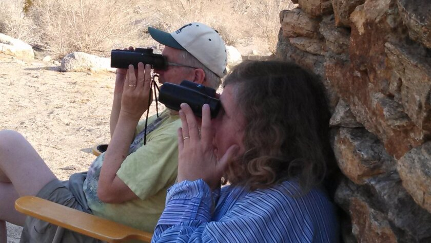 Volunteer bighorn sheep watchers Joe and Donna Hopkins, Borrego Springs residents, scan the mountains Friday morning looking for sheep to count. They have been official counters for 18 years.