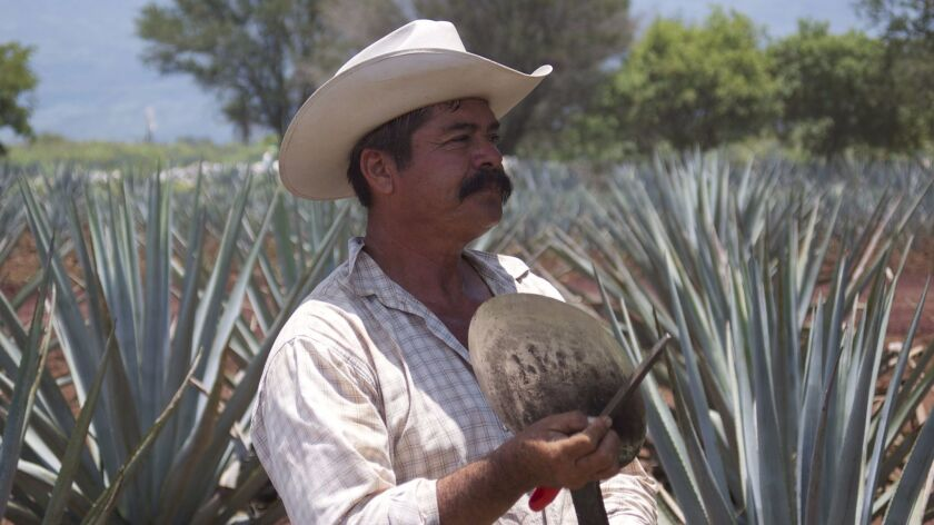 You'll know you've arrived to the town of Tequila by the blue agave fields that stretch for miles over rugged, hilly terrain. All of the world's tequila is produced in this region. Marlise Kast-Myers photo