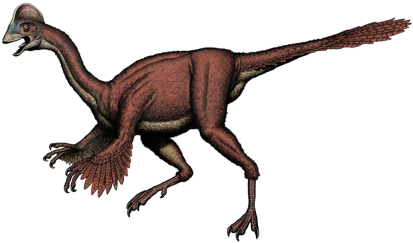 """The dinosaur Anzu wyliei was nicknamed the """"chicken from hell"""" by its discoverers."""