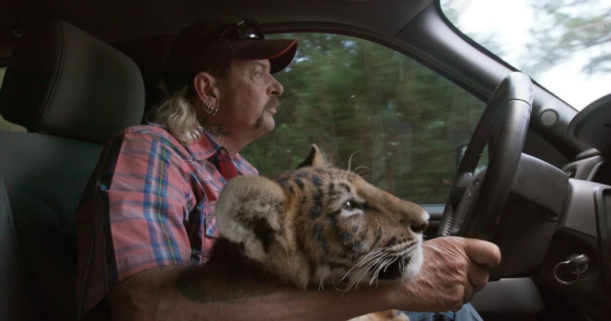 TIGER KING LADIES T SHIRT WOMENS FUNNY COOL JOE EXOTIC WILDLIFE WILD ANIMALS