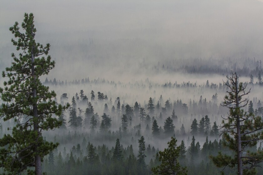 Smoke from a wildfire west of Sisters, Ore., blankets the Deschutes National Forest.
