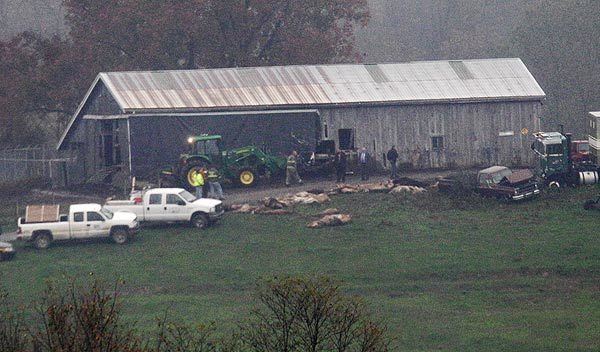 Investigators walk around a barn as carcasses lay on the ground at the Muskingum County Animal Farm Wednesday in Zanesville, Ohio. Police with assault rifles stalked a mountain lion, grizzly bear and monkey still on the loose after authorities said their owner apparently freed dozens of wild animals and then killed himself.