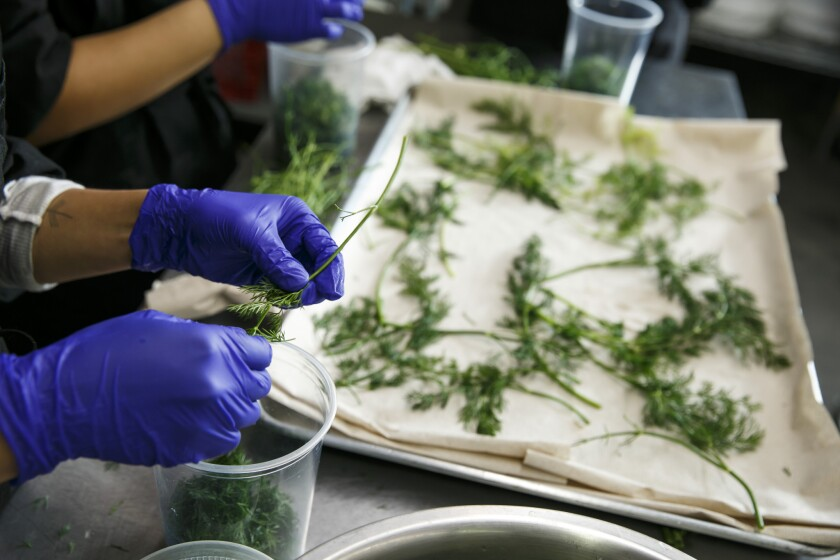 Workers at Salt & Straw's ice cream factory ready dill for use.